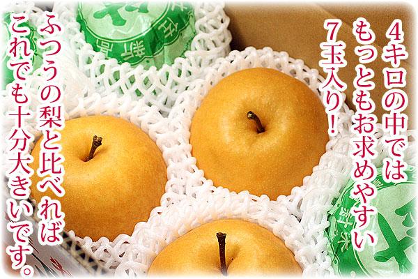 普通の梨を比べれば大きいほうです。4キロ7玉入り