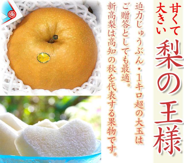 梨の王様・新高(にいたか)は、高知の秋を代表する大きな果物です。