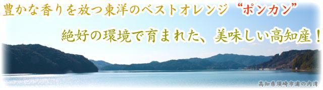 """東洋のベストオレンジ""""ポンカン""""を高知から"""