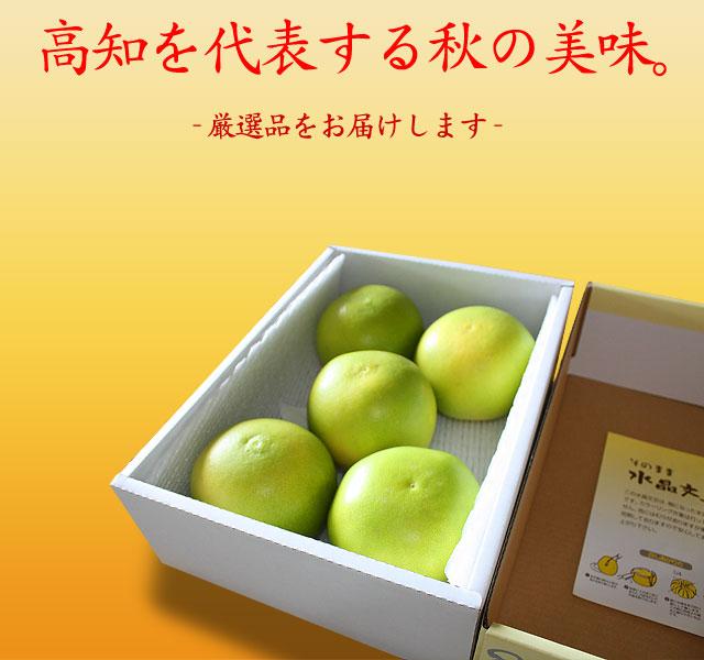 高知を代表する秋の果物です。