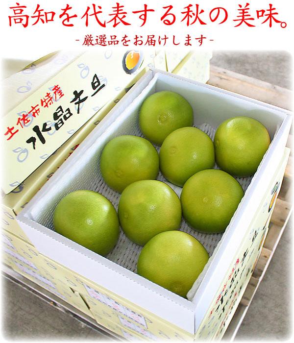 土佐を代表する秋の果物