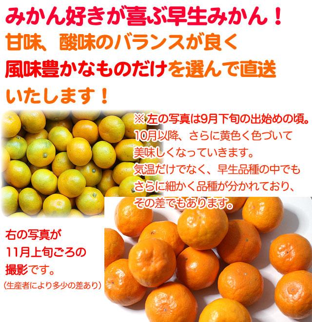 山北早生みかん(露地物)5kg 高知から厳選送料無料!