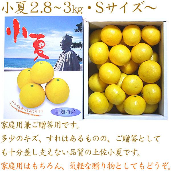 小夏2.8kg〜3kg家庭用兼ご贈答用S・Mサイズ