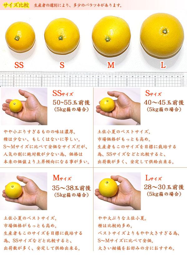 サイズ比較(SS〜Lサイズ)