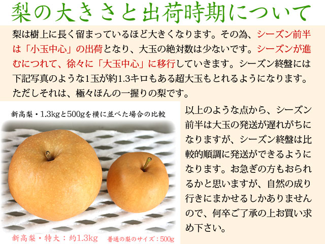 梨の大きさと出荷時期について