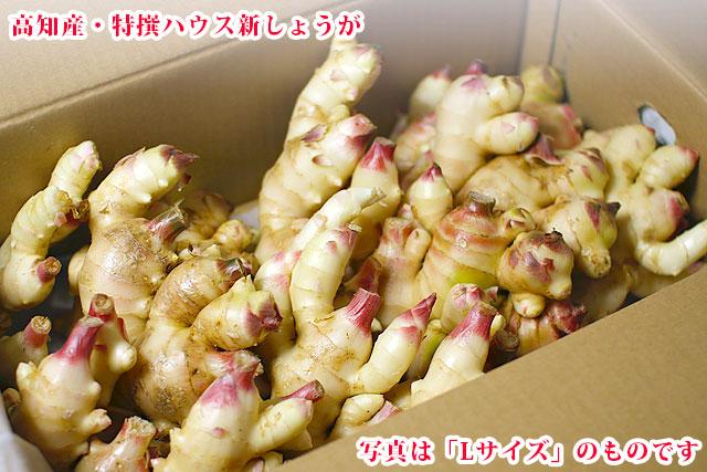 専用4キロ箱入り・高知県産新生姜