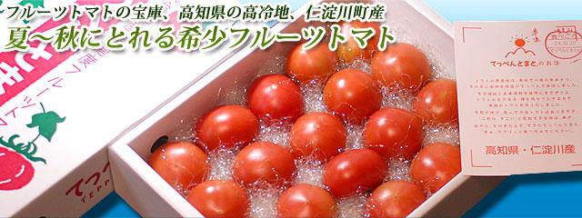 暑い季節(夏〜秋)のフルーツトマト・高知県産・てっぺんとまと・1kg