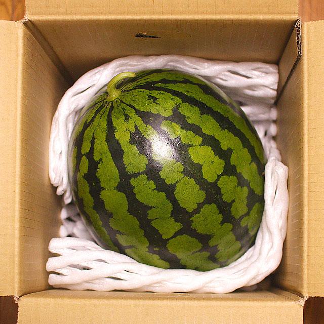 西瓜(スイカ)1玉箱・梱包状態