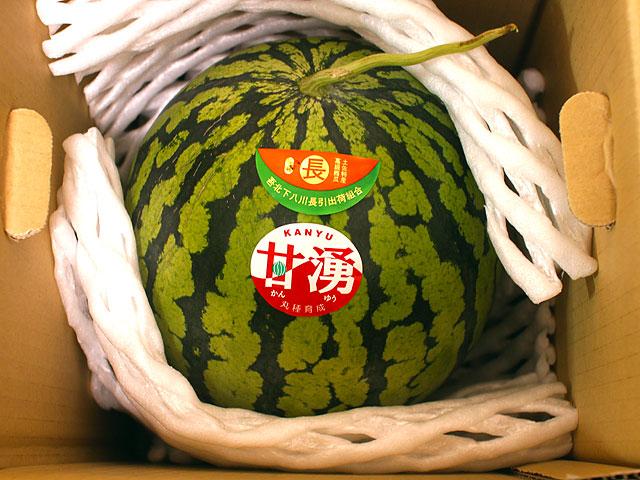 高知産・特撰高級西瓜(スイカ)1玉〜2玉