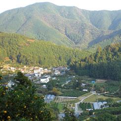 高知県安芸市、柚子の山より
