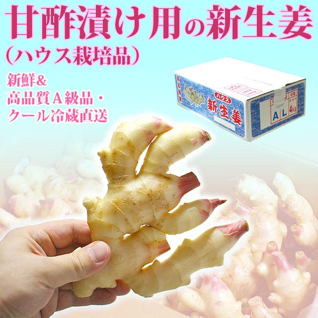 甘酢漬け用の新生姜(ハウス栽培品)・高知産