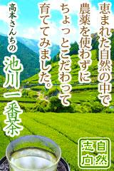 農薬不使用・高本さんちの池川一番茶