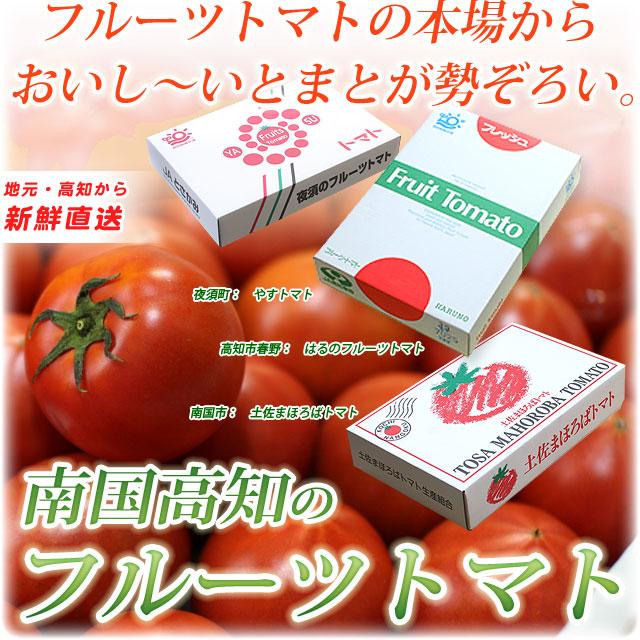 南国高知のフルーツトマト・(冬から春)