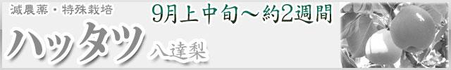 ハッタツ梨(八達)