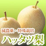 ハッタツ(八達)梨