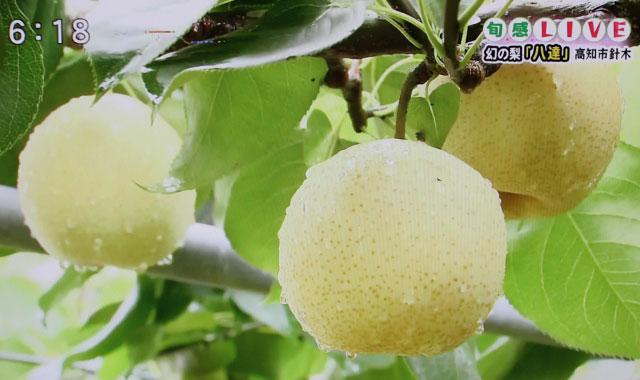 植田省三梨園の八達梨は、地元のテレビで紹介されたこともあります。