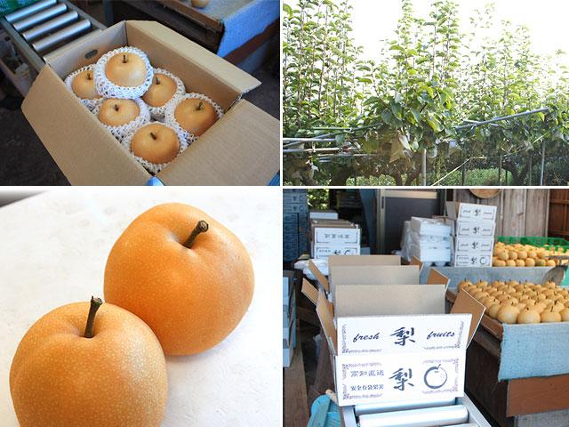 美味しい梨を厳選農家から産地直送でお届けします