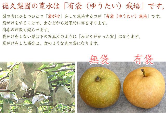 徳久梨園の梨(なし)は、有袋栽培です