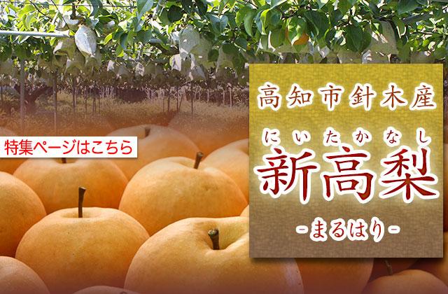 高知・針木産・新高梨(にいたかなし)