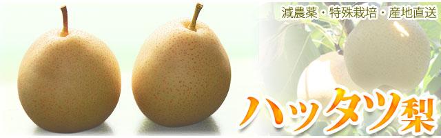 ハッタツ(八達梨)