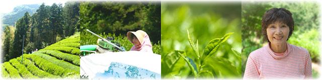 池川茶「一番茶」農薬不使用