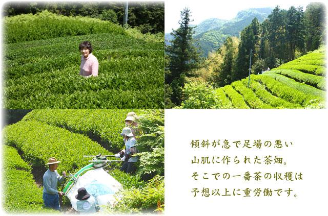 高本さんちの農薬不使用のお茶です