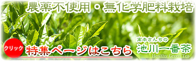 高本さんちの池川一番茶