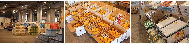 高知県内各地から集まる小夏のなかから、厳選品をお届けします。