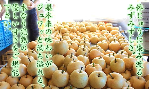 木なり完熟・幸水(こうすい)梨本来の美味しさを大切にしています。