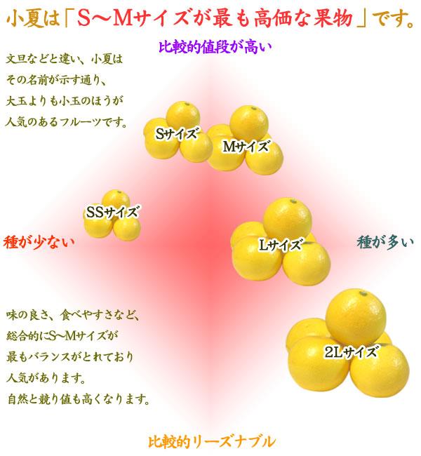 小夏のS〜Mサイズが高値です。