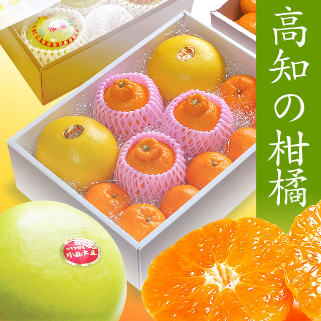 高知の柑橘(かんきつ)