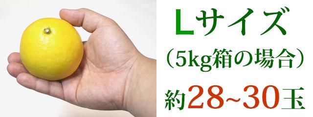 Lサイズ(5kg箱の場合)約28~30玉