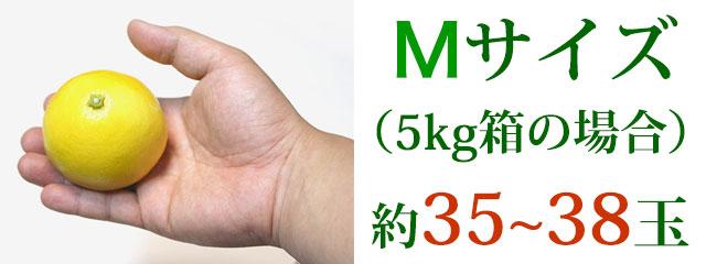Mサイズ(5kg箱の場合)約35~38玉