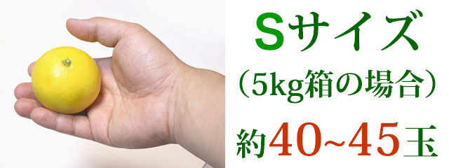 Sサイズ(5kg箱の場合)約40~45玉