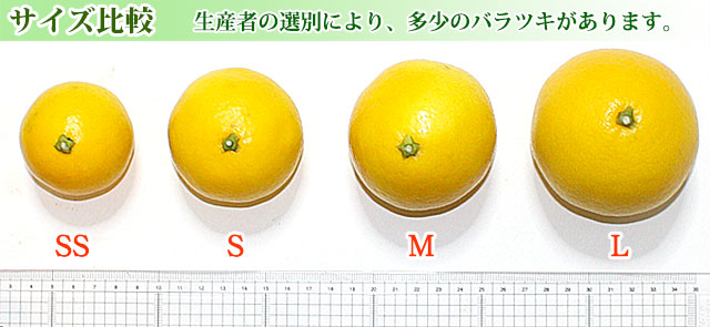 小夏のサイズ比較(2S~L)