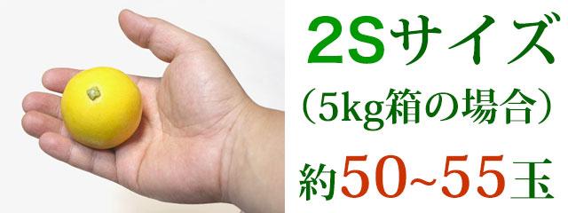2Sサイズ(5kg箱の場合)約50~55玉