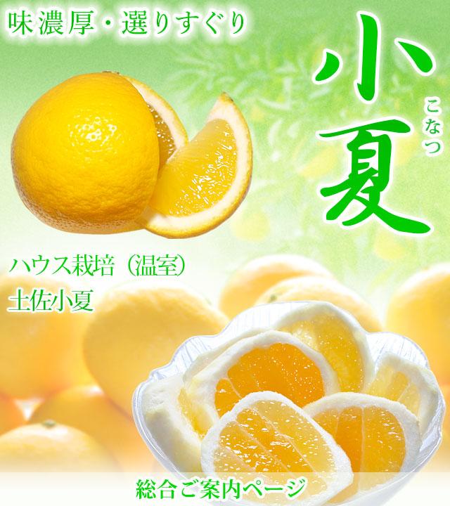小夏(ハウス栽培・土佐小夏)・総合トップページ