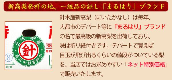 まるはりブランド新高梨(高知市朝倉針木産)