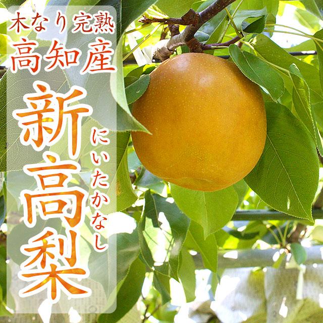 高知県産・新高梨 (にいたかなし)・総合ご案内ページ