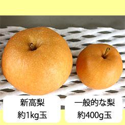 新高梨と、他の梨の大きさ比較