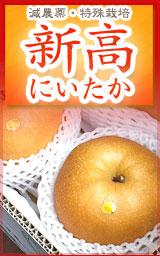 高知県産・新高梨(にいたかなし)・産地直送