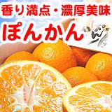 特撰ぽんかん(高知・立目・浦の内産)