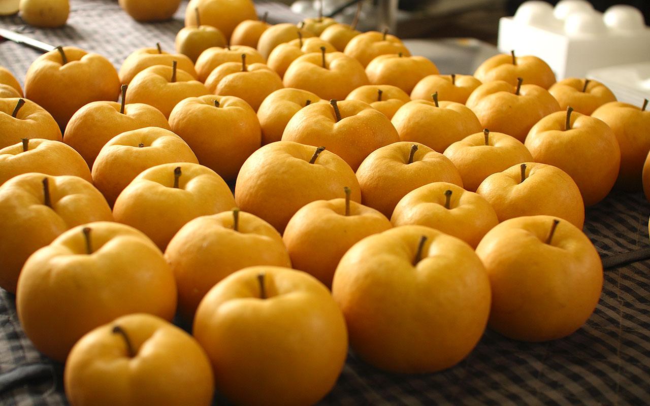 農家で収穫したばかりの完熟梨・凜夏(りんか)