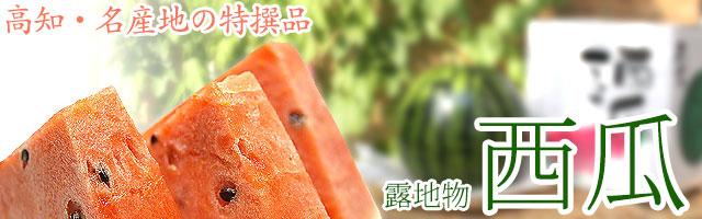 高知県産・特撰・露地物・高級西瓜(すいか)