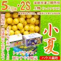 土佐小夏(とさこなつ)・高知県産・家庭用兼ご贈答用(上物・ハイクラス)・大箱(約5kg)・2Sサイズ