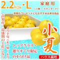 土佐小夏(高知県産)・家庭用(上物・スタンダード)・小箱(約2.2kg)・Lサイズ