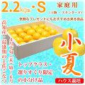 土佐小夏(高知県産)・家庭用(上物・スタンダード)・小箱(約2.2kg)・Sサイズ