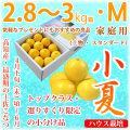土佐小夏(高知県産)・家庭用(上物・スタンダード)・中箱(約2.8〜3kg)・Mサイズ