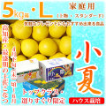 土佐小夏(高知県産)・家庭用(上物・スタンダード)・大箱(約5kg)・Lサイズ【送料無料】