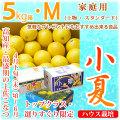土佐小夏(高知県産)・家庭用(上物・スタンダード)・大箱(約5kg)・Mサイズ